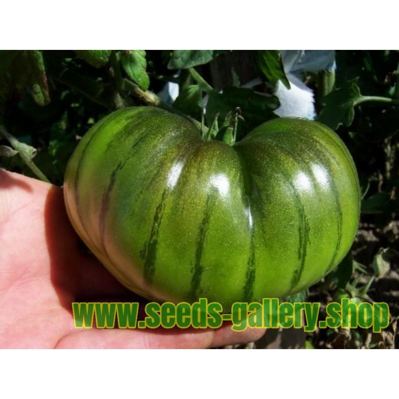 ARBUZNYI Big Green Tomatensamen