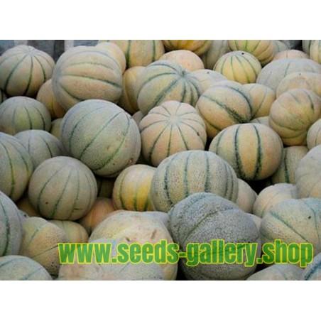 Σπόροι TALIBI Περσικό Πεπόνι