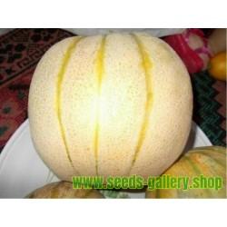 Semillas del melón persa TALIBI