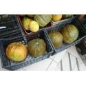 Casaba Turkish melon seeds