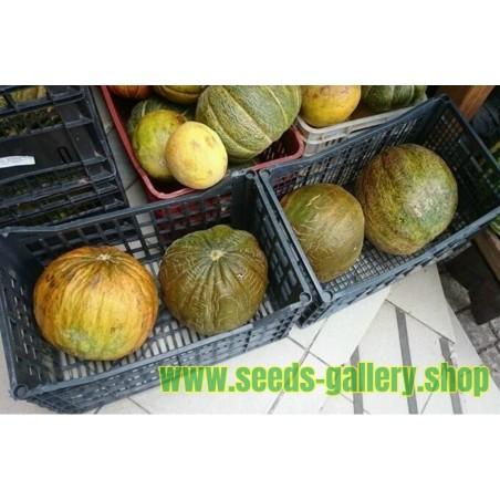 CASABA Turkiska Melon Frön