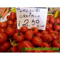 Sementes de tomate GRAPPOLO