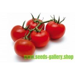Semillas de tomate GRAPPOLO