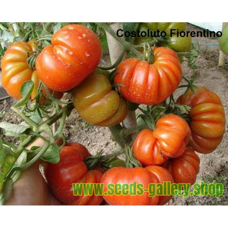 Graines de piment de Cayenne RING OF FIRE