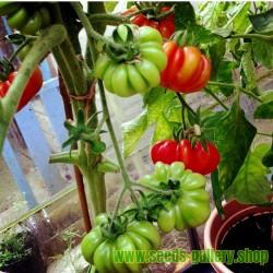 Tomat frön Beefsteak COSTOLUTO FIORENTINO