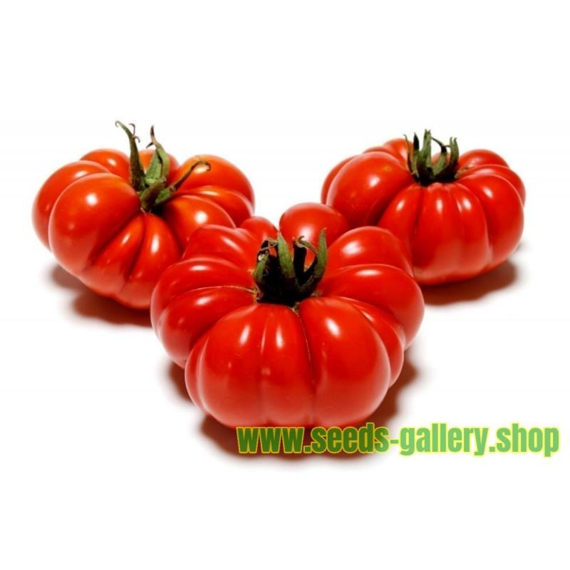 Graines de Tomate chair de bœuf COSTOLUTO FIORENTINO