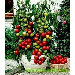 Σπόροι Τομάτας Balkonzauber