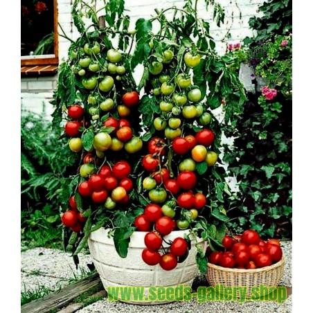 Balkonzauber Tomatensamen