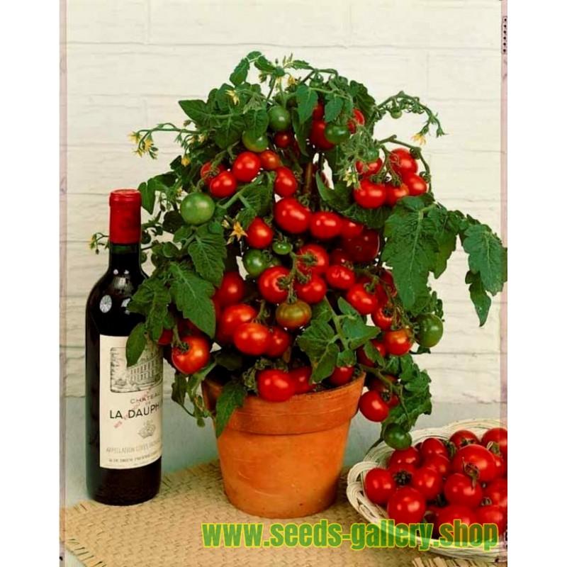 Balkonzauber Tomato Seeds (Balcony Charm)