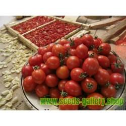 Graines de Tomate FIASCHETTO