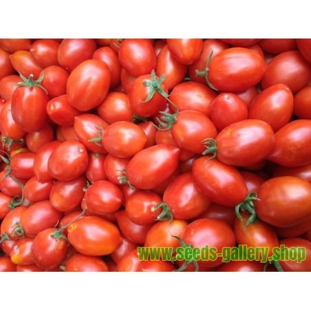 Tomat frön FIASCHETTO