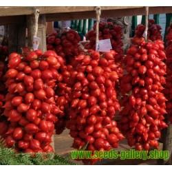 Semillas de tomate FIASCHETTO