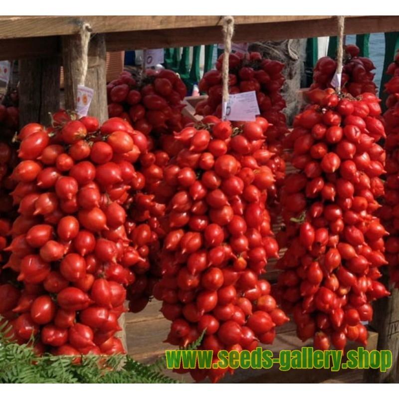 Sementes De Tomate Italiano FIASCHETTO