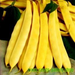 Graines de Haricots nain mangetout SUPERNANO GIALLO