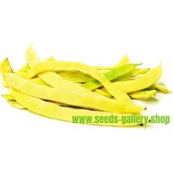 Bush Bean Seeds SUPERNANO GIALLO