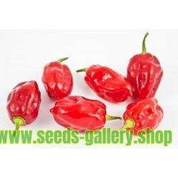 Sementes Pimenta Habanero Tobago Seasoning