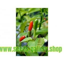 Aji Pipi de Mono Chili Seeds