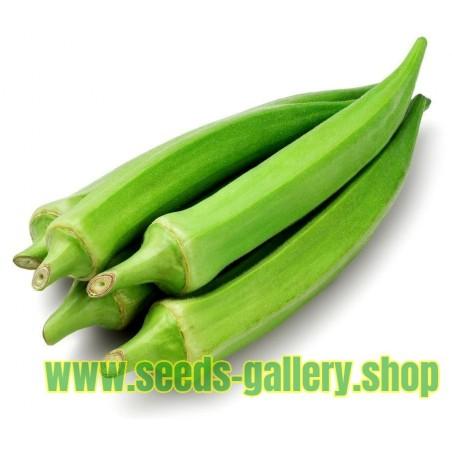 Yeşil Bamya tohumları (Abelmoschus esculentus)