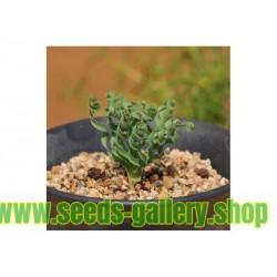 Cómo Siembra y cultivos pimientos - tomate