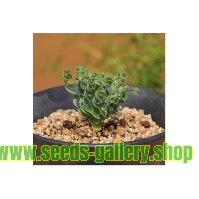 C mo siembra y cultivos pimientos tomate instrucciones for Plantar pimientos y tomates