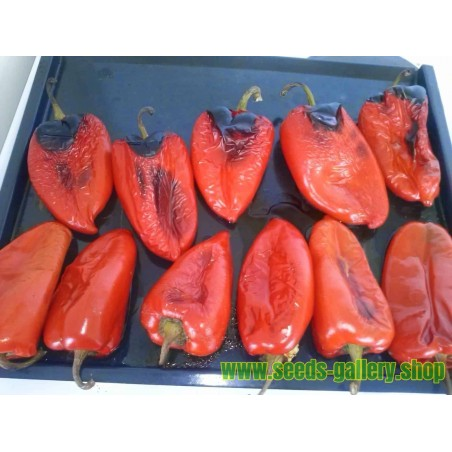 """Elephant's Ear"" Sweet Pepper Seeds"