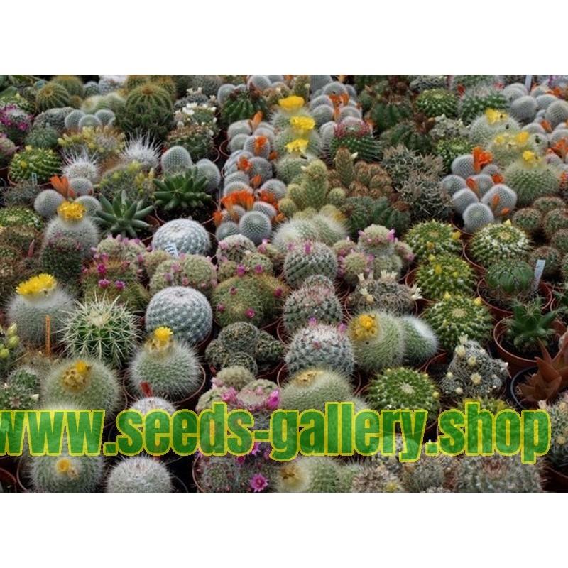 Liste des espèces de cactus dans la Liste rouge des espèces menacées