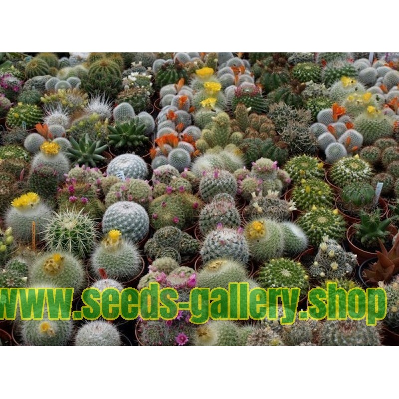 List of cacti species in the Red List of Threatened Species