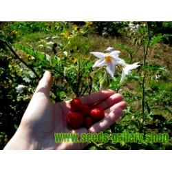 Pomodoro del Litchi 5000 Semi