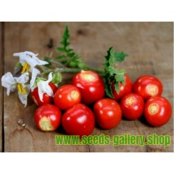 Tomate Litchi 5000 Semillas - Espina Colorada