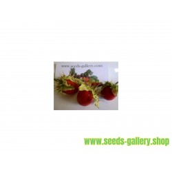 DIAMOND Sweet Pepper Seeds (White)