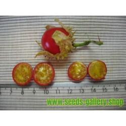 Litchi Tomato 1000 Sementes - Morelle de Balbis