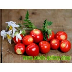 Litchi Tomato 1000 Seed - Morelle de Balbis