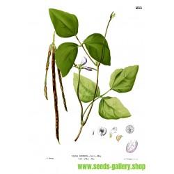 CRNOOKICA - KRAVLJI PASULJ Seme (Vigna unguiculata)