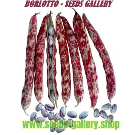 Σπόροι φασολιών Borlotto Lingua Di Fuoco