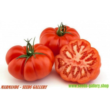 Sementes de Tomate MARMANDE Beefsteak