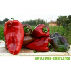 Paprika Elephant's Ear 1100+ Seeds