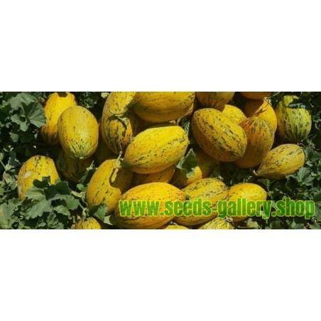 Dalaman Melon Fresh Seeds