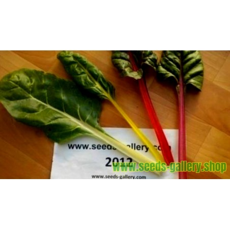 Sementes Acelga Chard Rainbow Seeds
