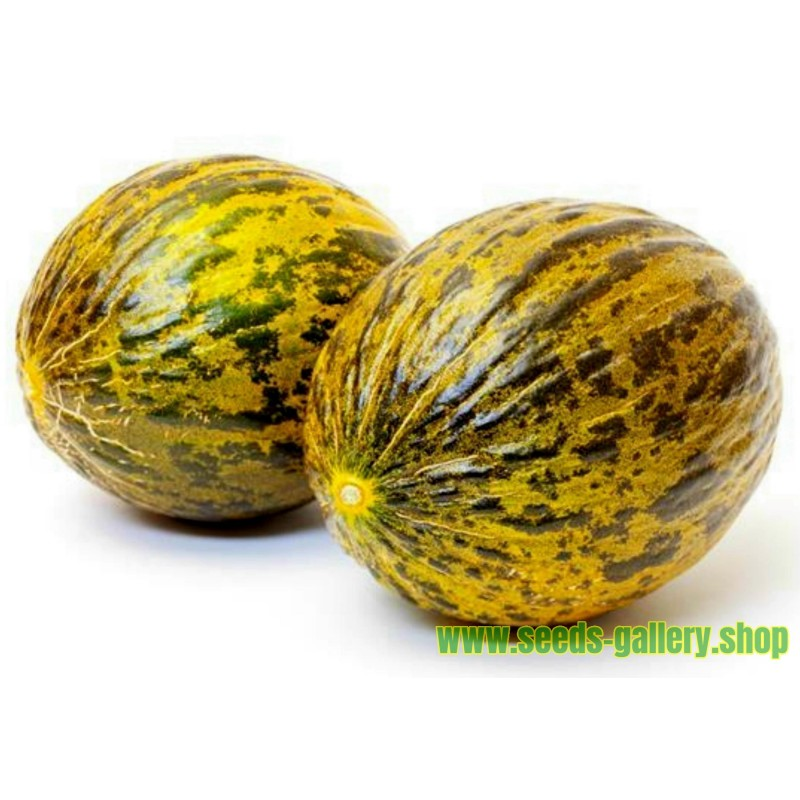 Graines de Melon DALAMAN