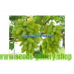 Semillas De Uvas Dedo