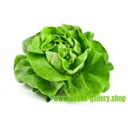 Lettuce Seeds May Queen