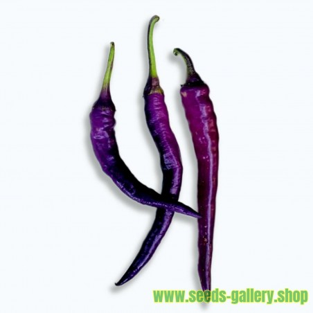 Semillas de Chile Cayenne purple