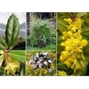 Carolina Reaper Chilli Samen Weltrekord Guinessbuch Schärfste Chili