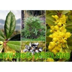 Semi di Crespino di Giuliana, Crespino sempreverde, Crespino cinese
