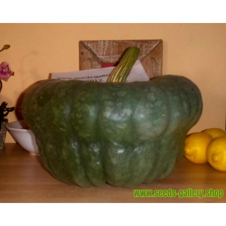 Semillas De Calabaza Queensland Blue