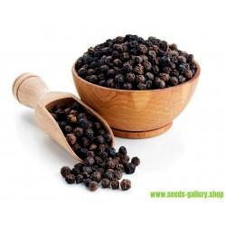 Graines de POIVRIER NOIR (Piper nigrum)