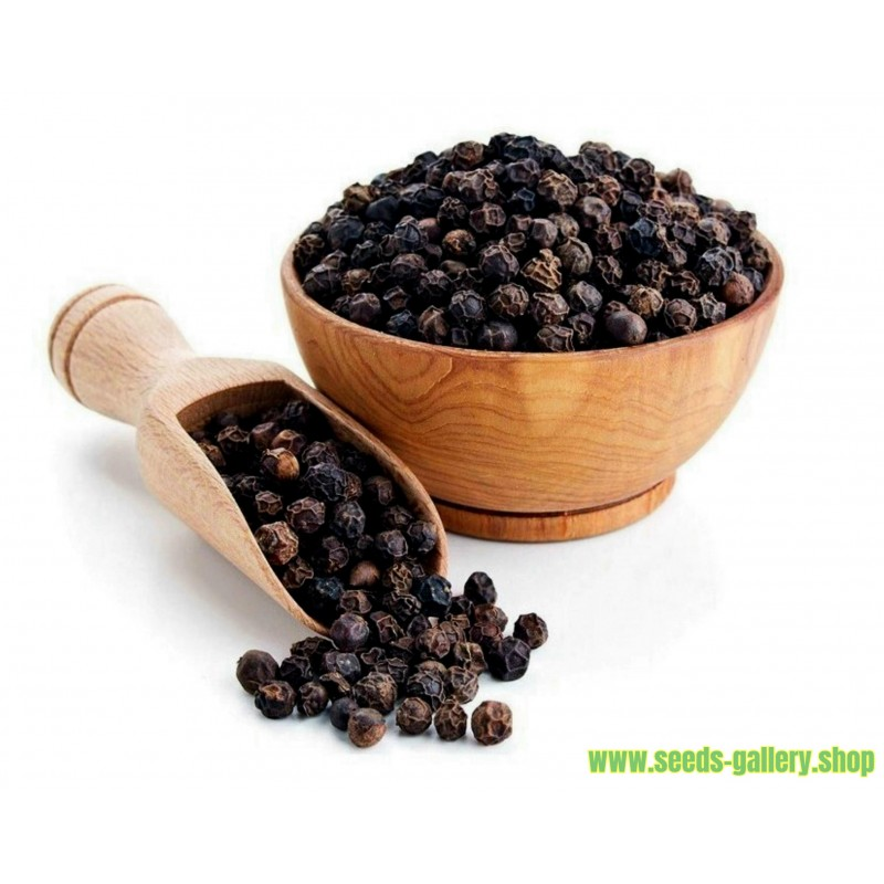 Black Pepper Seeds (Piper nigrum)