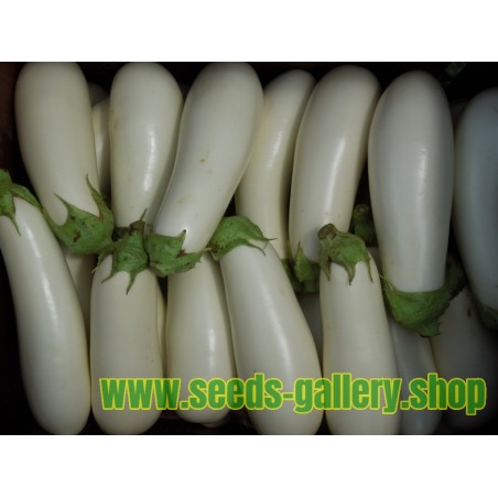 Sementes de Beringela - Berinjela Branca