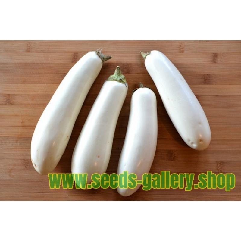 Semillas de Berenjena blanca larga