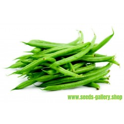 French Beans Seeds DUBBELE WITTE